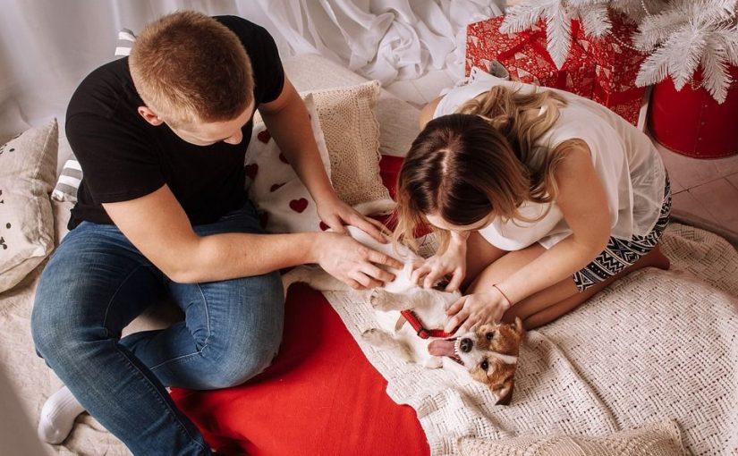 Tierisch verliebt – Als Tierbesitzer einen Partner finden